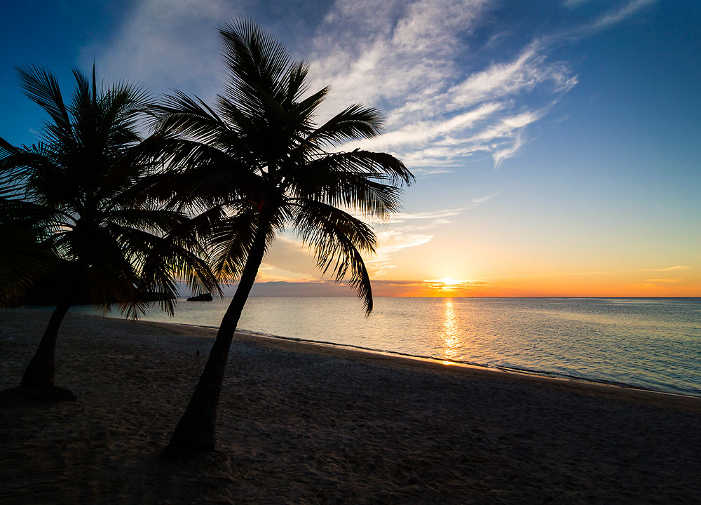 palm-tree-roatan-sunset-img_4740